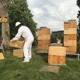med našich včel